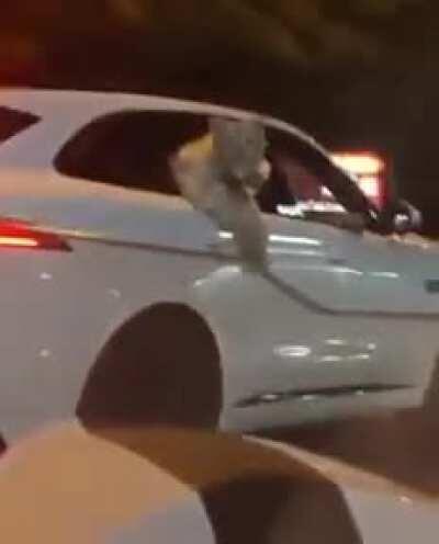 More tiger footage
