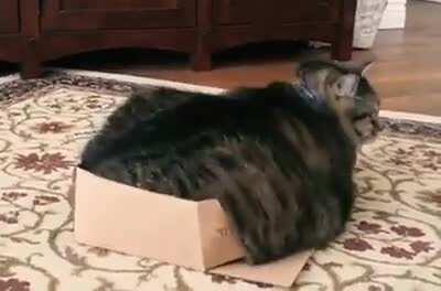 If it fits I sits, whoops