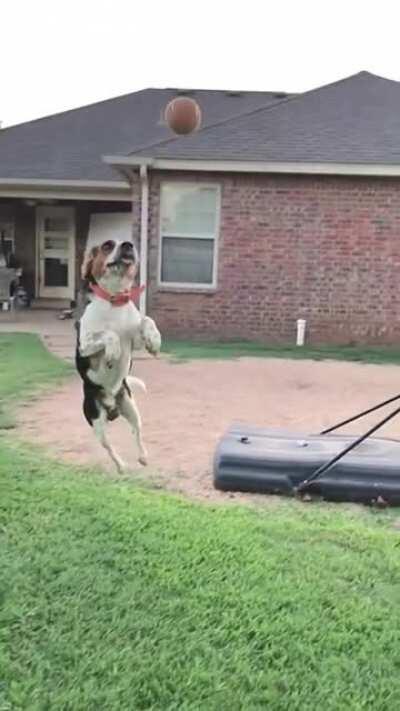Beagle skills