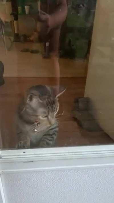 My cat wants to come outside.look at those cheekies.
