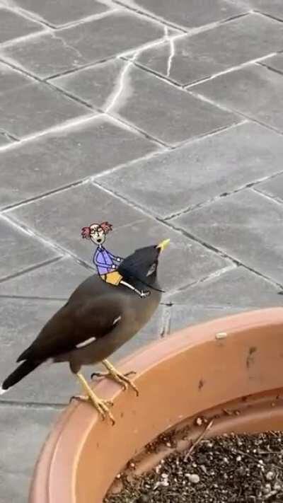 My mate Boris got a new bird