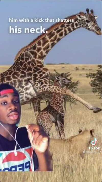 Giraffe facts but they get more disturbing