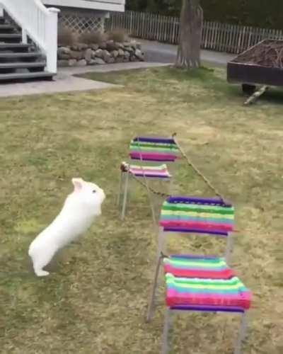 The highest rabbit jump on record is three and a half feet! The same rabbit holds the record for the longest jump as well, at 9.88 feet.