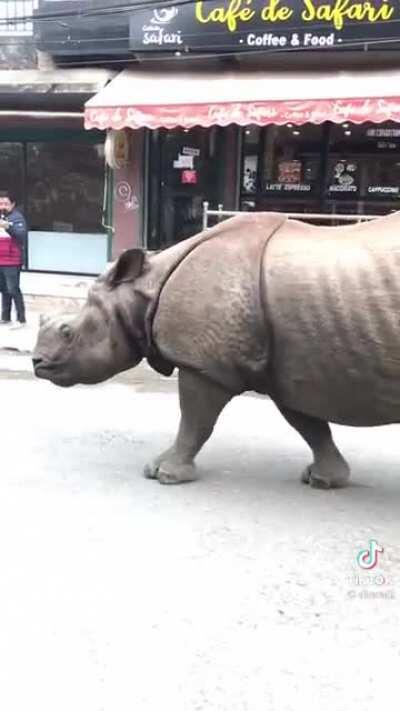Just a random rhino walking through a street in Nepal