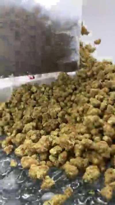 Loading up 3000g of Lemon Zkittles