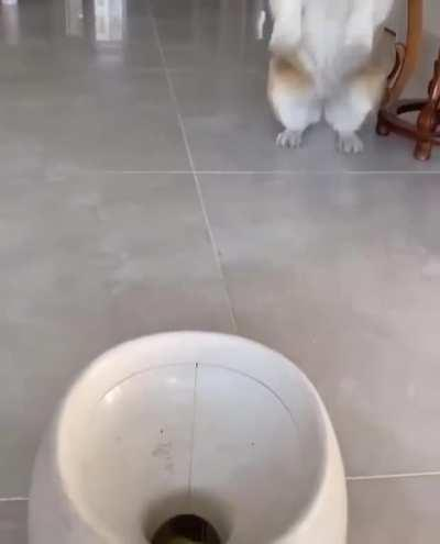 dog plays with himself