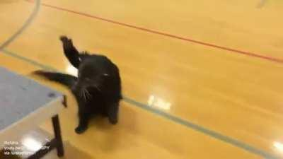Popcorn the bearcat sliding on the gym floor