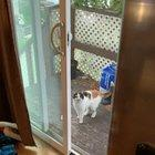 hide and seek with neighbors kitty, Maggie :)