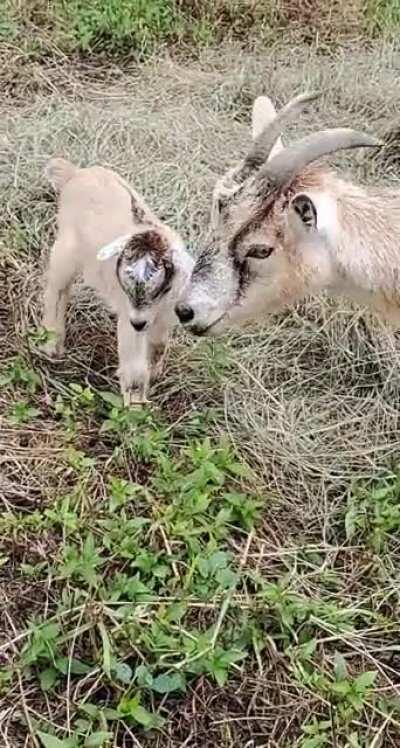 A mother and her kid talking to each other, seen at an apple picking farm. It was the highlight of my day!