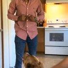 Not my video but doggo attacks