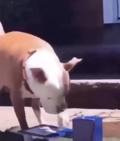 AnimalsBeingConfused