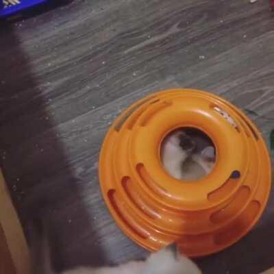 Kitten's first fits