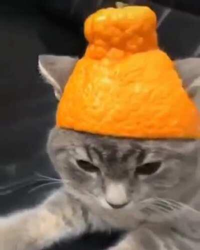 Orange Beanie for the Cat!