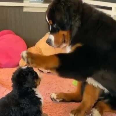 The unbreakable bond of doggos
