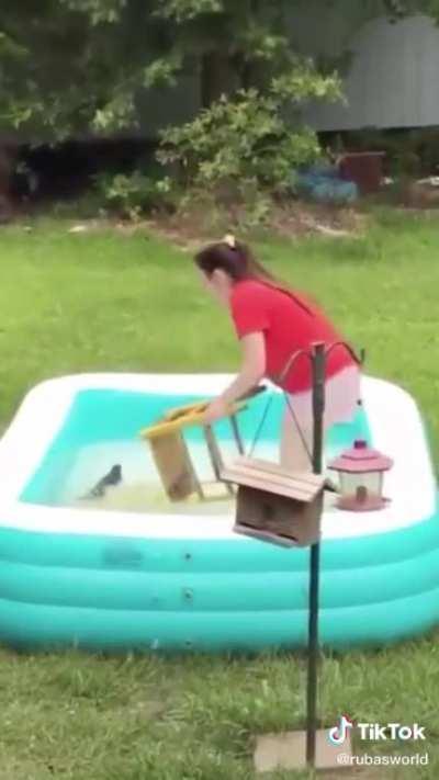Girl saves drowning squirrel