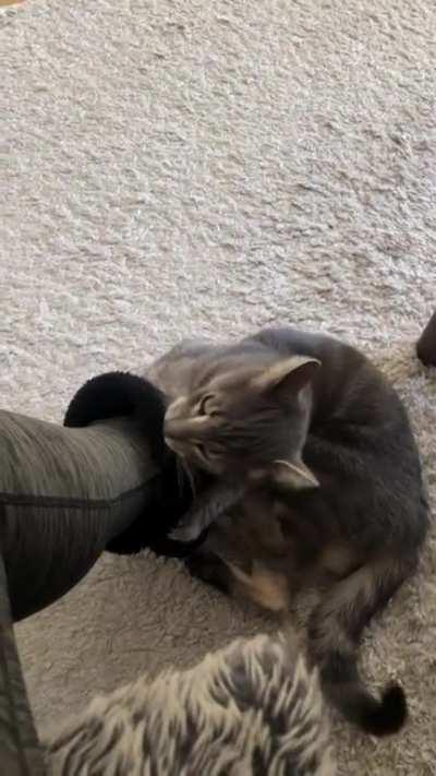 notmycat