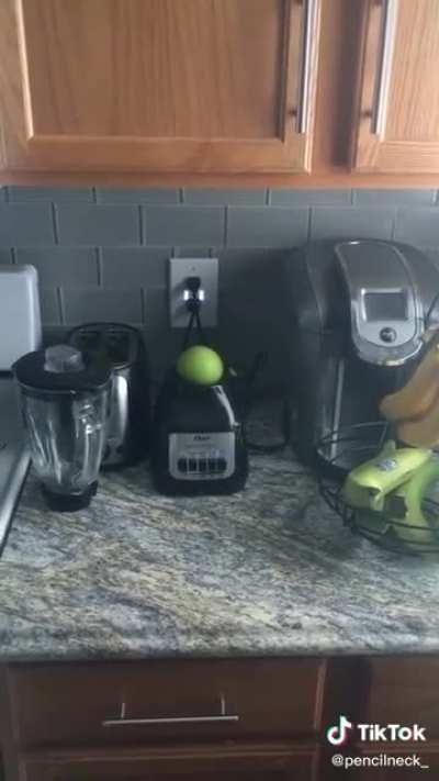 Apple in a blender stand, what could go wrong?