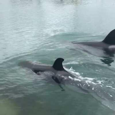 A little video of the orcas today in Wellington