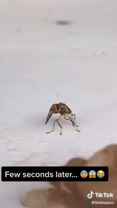 Y'all ever seen a wasp get high ?