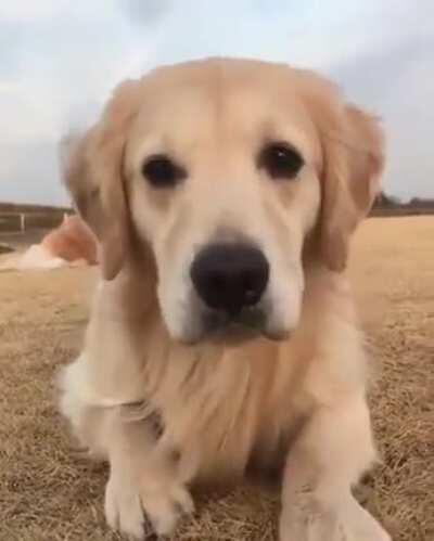 Golden Eyebleach