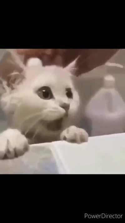Bye bye mr kitten