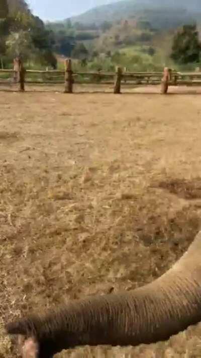 Elephants 🐘 going crazy in Thailand 🇹🇭