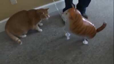 TwIsTeD bAsTaRd CaTfIsHeS a CaT tHeN rEcOrDs A mUrDeR