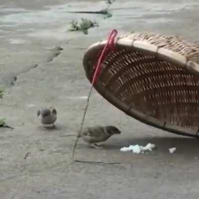 This bird risking its life to feed a fellow bird.