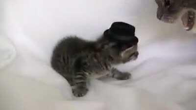 Putting a hat on a kitten. (smackkk!)