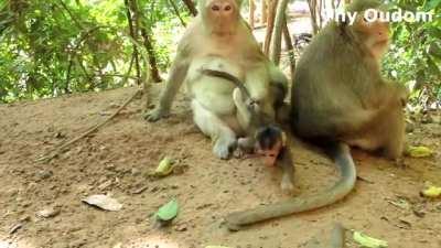 Two monkey so cute