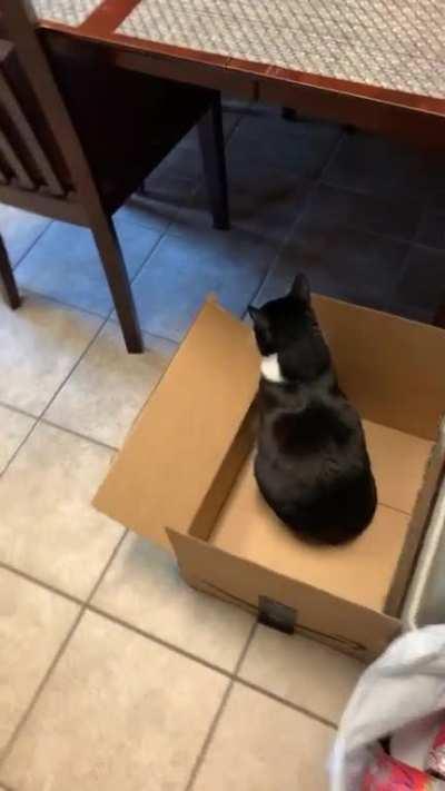Cats, amirite ?