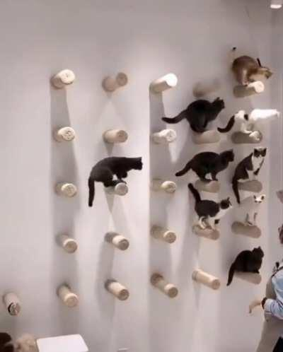 Cattina, Summoner of cats!