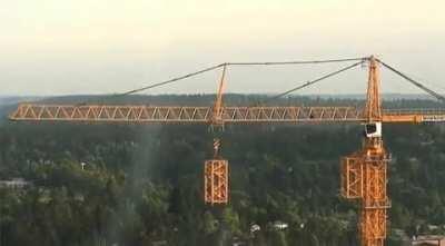 How a crane grows.