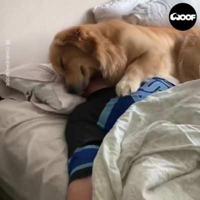 The Unconditional Love Of Dogs Is Incredible