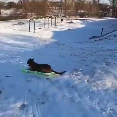 This dog snow sledding by itself