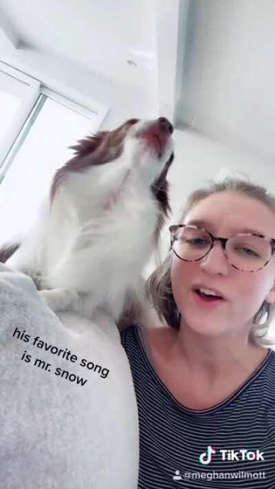 """Chihuahua sings """"Mr. Snow"""" from Carousel"""