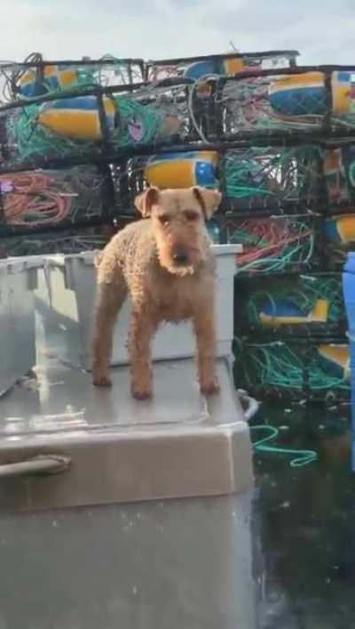 The rare 'actual sea dog' and his sealegs.