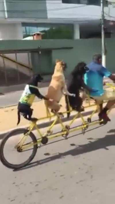 Just chillin going on a bike cruise