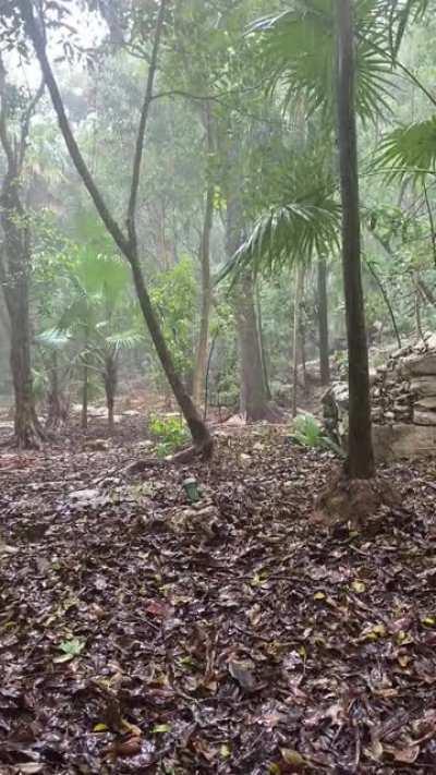 Peaceful rainforest type rain in Playa Del Carmen