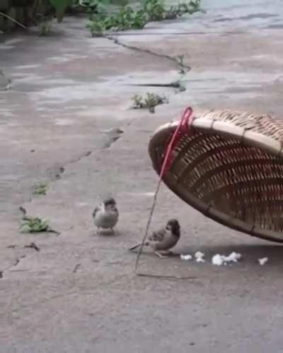 When he keeps his wife away from the tramp , smart male bird .