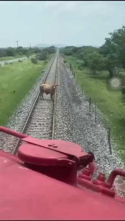 Bitch I am a cow, Bitch I am a train.