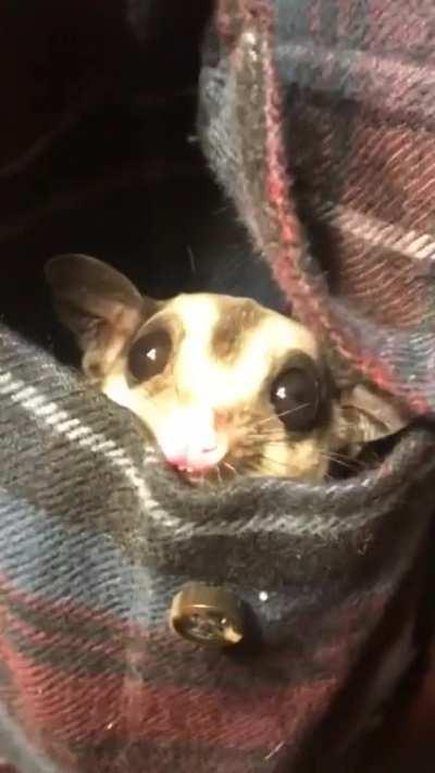 My little pocket goblin just woke up from her nap