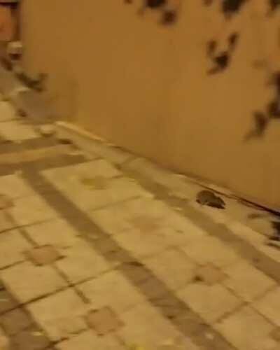Mouse challenges chasing cat