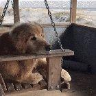 A peaceful pupper just enjoying a quiet day on the beach