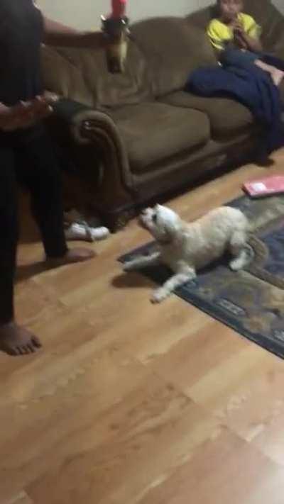 My dog goin a little wild