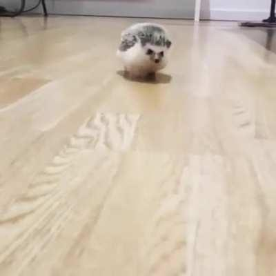 Lil paws. Adorable run 😍