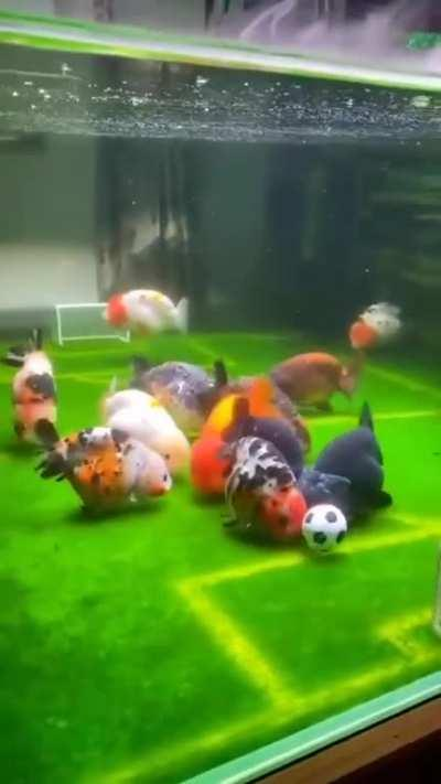 Fish soccer should be a sport caw caw