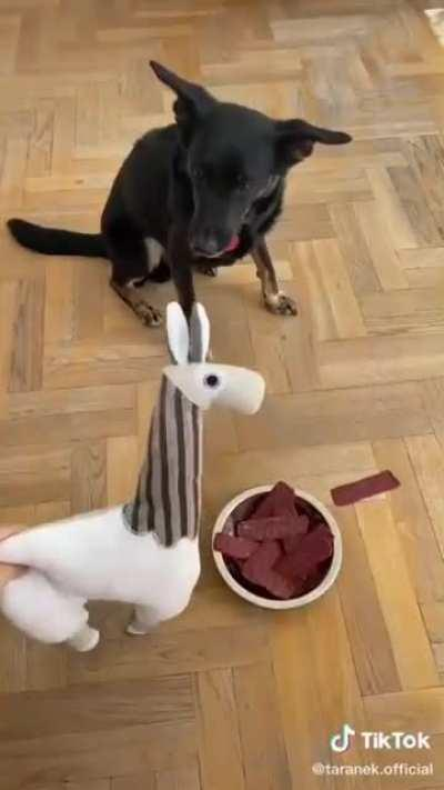 Dog thinks food is deadly to eat 😂