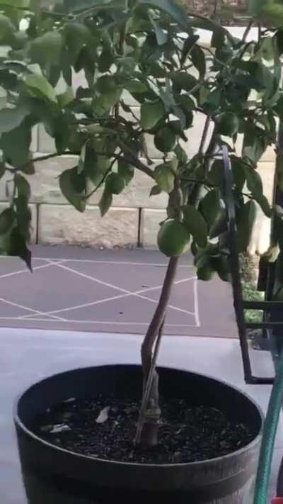 🔥 Bird having some fun with basketball 🔥