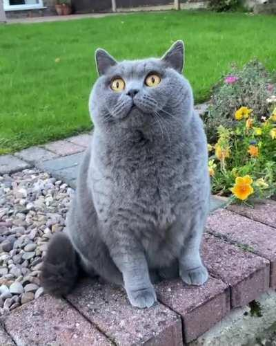 Curious chonker watches a plane fly by ✈️